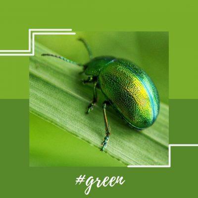 colores verde